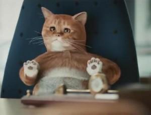 реклама Hyundai с котом